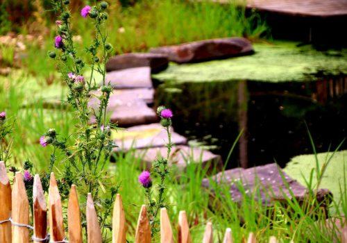 Teich mit Blumen