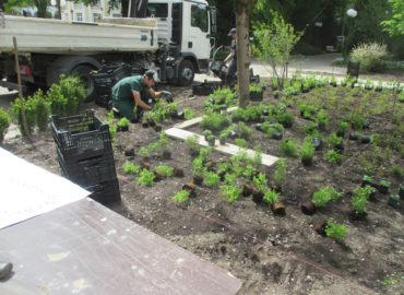 staudenpflanzung